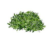 Salada da alga de Chuka Wakame do japonês no branco Fotos de Stock Royalty Free