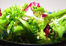 Salada da chicória, do radicchio e da endívia fotos de stock