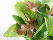 Salada da folha do bebê Foto de Stock