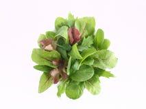 Salada da folha do bebê Fotografia de Stock Royalty Free
