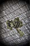 Salada de Bush em um fundo abstrato Imagem de Stock Royalty Free