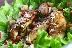 Salada de Cezar com galinha e tomates imagem de stock