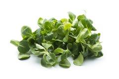 Salada de milho Imagem de Stock