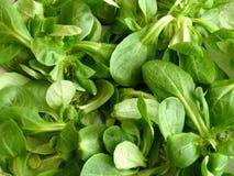 Salada de milho fotografia de stock