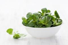 Salada de milho Fotos de Stock Royalty Free
