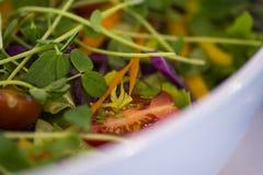 A salada do alimento imprensa o jantar da refeição da sobremesa Fotos de Stock Royalty Free