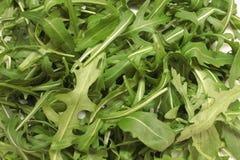 Salada do Arugula fotografia de stock royalty free