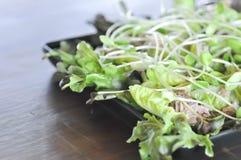 Salada do atum e do vegetal Fotos de Stock