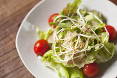 Salada do broto do girassol Fotos de Stock
