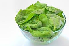 Salada do espinafre fotos de stock