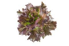 Salada do legume fresco Fotografia de Stock