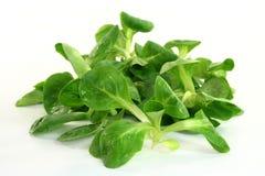 Salada do milho Imagens de Stock Royalty Free