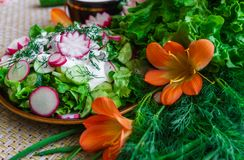 Salada do rabanete e do pepino orgânicos frescos com o aneto e as cebolas verdes vestidos com creme de leite imagens de stock royalty free
