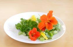Salada do verão Fotografia de Stock