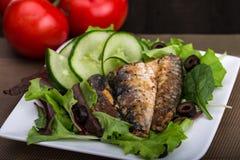 Salada fresca do pepino e da alface com sardinha enlatada Imagens de Stock Royalty Free