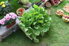 Salada fresca grande no jardim na grama Foto de Stock