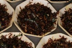 Salada gigante da formiga Foto de Stock Royalty Free