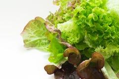 Salada lavada jovens Fotografia de Stock