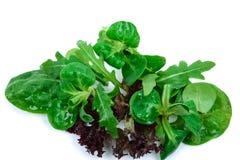 Salada misturada em um fundo branco Imagem de Stock Royalty Free