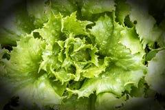 Salada nova, verde em um close-up da cama Alimento saudável vignette fotos de stock