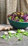 Salada orgânica do cânhamo Fotos de Stock Royalty Free