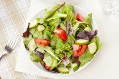 Salada orgânica verde fresca do jardim Fotos de Stock
