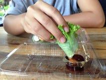 A salada rola na caixa plástica clara Imagem de Stock Royalty Free