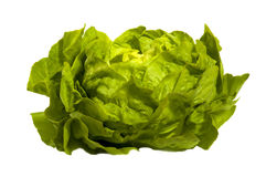 Salada verde - alface, isolada no branco fotografia de stock royalty free