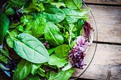 Salada verde de Freshh com espinafres, rúcula, romane e alface Imagens de Stock Royalty Free
