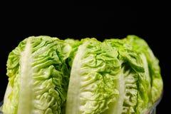 Salada verde fresca Fotografia de Stock