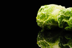 Salada verde fresca Imagens de Stock Royalty Free