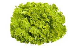 Salada verde fresca - alface, isolada imagens de stock royalty free