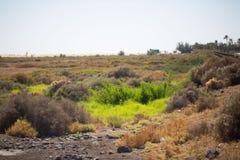 Saladar, auf Fuerteventura Lizenzfreie Stockfotografie