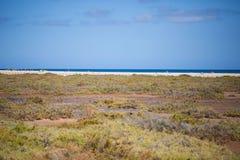 Saladar, na Fuerteventura Obrazy Royalty Free