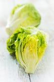 Saladas verdes Foto de Stock Royalty Free