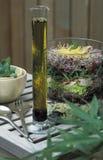 Salade assortie de pousse avec la rectification française photographie stock libre de droits