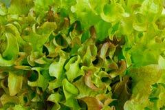 Salade closeup Arkivfoto