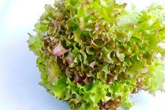 Salade closeupskott Arkivfoto