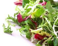 Salade croustillante Image stock