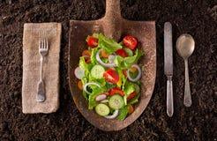 Salade cultivée sur place de jardin sur la pelle rouillée Photographie stock libre de droits