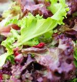 Salade d'été Photographie stock libre de droits