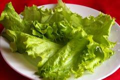 Salade d'endive Image libre de droits
