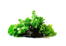 Salade d'isolement sur le fond blanc Photo libre de droits