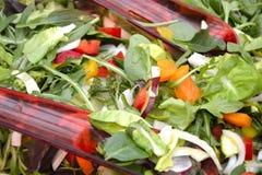 Salade dans l'abowl Photographie stock