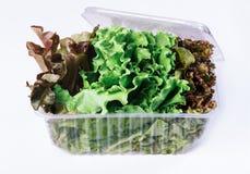 Salade dans un récipient en plastique Photographie stock libre de droits