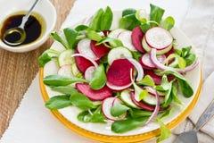 Salade de betteraves et de radis photo stock