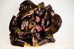 Salade de Burgunder, fond blanc Photographie stock libre de droits