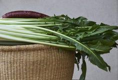 Salade de catalogna de cicoria de chicorée dans le panier photo stock