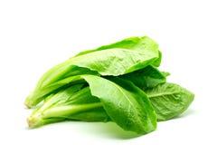 Salade de Cos Lettuce. Photos stock