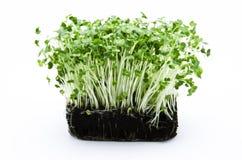 Salade de cresson Photos libres de droits